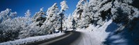 """Road passing through a forest, Lake Arrowhead, San Bernardino County, California, USA by Panoramic Images - 36"""" x 12"""""""