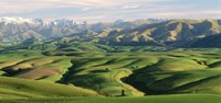 """Farmland S Canterbury New Zealand by Panoramic Images - 36"""" x 12"""""""