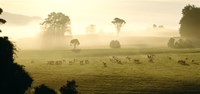 """Farmland & Sheep Southland New Zealand by Panoramic Images - 36"""" x 17"""""""