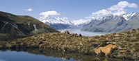 "Horse Trekking Mt Cook New Zealand by Panoramic Images - 36"" x 12"""