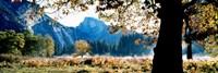 "Half Dome, Yosemite National Park, California, USA by Panoramic Images - 36"" x 12"""