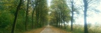 """Road With Fog, France by Panoramic Images - 36"""" x 12"""""""