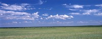 """Herd of Bison on prairie Cheyenne WY USA by Panoramic Images - 36"""" x 12"""""""