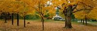 "Autumn, Muskoka, Canada by Panoramic Images - 36"" x 12"""