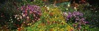 """Close-up of flowers, Muren, Switzerland by Panoramic Images - 36"""" x 12"""""""