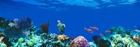 """Underwater, Caribbean Sea by Panoramic Images - 36"""" x 12"""""""