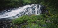 Waterfall in the forest, Mt Rainier National Park, Washington State, USA Fine Art Print