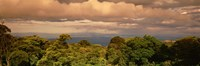 """Monteverde Puntarenas Province Costa Rica by Panoramic Images - 36"""" x 12"""""""
