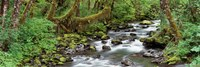 """Creek Olympic National Park WA USA by Panoramic Images - 36"""" x 12"""""""