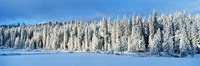 "Winter Wawona Meadow Yosemite National Park CA USA by Panoramic Images - 36"" x 12"", FulcrumGallery.com brand"