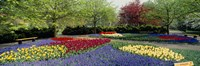 "Keukenhof Gardens, Lisse, Netherlands by Panoramic Images - 36"" x 12"", FulcrumGallery.com brand"