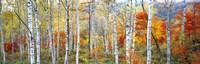 Fall Trees, Shinhodaka, Gifu, Japan Fine Art Print