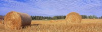"""Straw Rolls, Sweden by Panoramic Images - 36"""" x 12"""""""