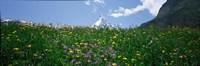 """Wild Flowers, Matterhorn Switzerland by Panoramic Images - 36"""" x 12"""""""