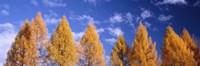 "Lark Trees, Switzerland by Panoramic Images - 36"" x 12"" - $34.99"