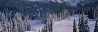 """Fir Trees, Mount Rainier National Park, Washington State, USA by Panoramic Images - 36"""" x 12"""""""