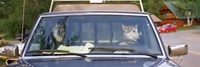 """Close-up of two dogs in a pick-up truck, Main Street, Talkeetna, Alaska, USA by Panoramic Images - 36"""" x 12"""""""