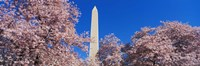 "36"" x 12"" Washington Monument"