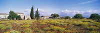 """Buildings in a field, Majorca, Spain by Panoramic Images - 36"""" x 12"""""""