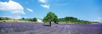 Lavender Field Provence France Fine Art Print