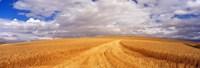 "Wheat Field, Washington State, USA by Panoramic Images - 36"" x 12"""