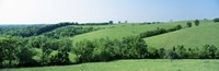 "Horse Farm, Kentucky, USA by Panoramic Images - 36"" x 12"""