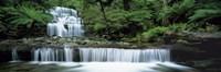 "Liffey Falls, Tasmania, Australia by Panoramic Images - 36"" x 12"""