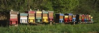"""Row of beehives, Switzerland by Panoramic Images - 36"""" x 12"""" - $34.99"""