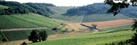 """France, Chablis, vineyards by Panoramic Images - 36"""" x 12"""""""