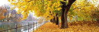 "Autumn Scene Munich Germany by Panoramic Images - 36"" x 12"", FulcrumGallery.com brand"