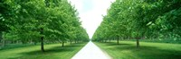 """Avenue at Chateau de Modave Ardennes Belgium by Panoramic Images - 36"""" x 12"""" - $34.99"""