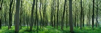 """Forest Trail Chateau-Thierry France by Panoramic Images - 36"""" x 12"""""""