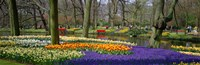 """Keukenhof Garden Lisse The Netherlands by Panoramic Images - 36"""" x 12"""""""
