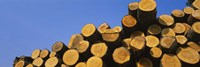 "Stack of wooden logs in a timber industry, Austria by Panoramic Images - 36"" x 12"""