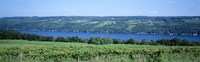 "Vineyard with a lake in the background, Keuka Lake, Finger Lakes, New York State, USA by Panoramic Images - 36"" x 12"""