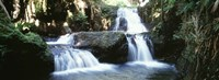 """Waterfalls Hilo HI by Panoramic Images - 36"""" x 12"""""""
