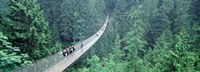 "Capilano Bridge, Suspended Walk, Vancouver, British Columbia, Canada by Panoramic Images - 36"" x 12"""