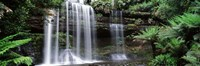 """Waterfall in a forest, Russell Falls, Mt Field National Park, Tasmania, Australia by Panoramic Images - 36"""" x 12"""""""