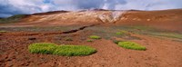 """Steam Emitting From The Ground, Lehmjukur Thermal Area, Iceland by Panoramic Images - 36"""" x 12"""""""