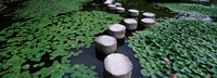 """Water Lilies In A Pond, Helan Shrine, Kyoto, Japan by Panoramic Images - 36"""" x 13"""""""