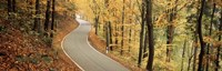 "Autumn trees along a road, Germany by Panoramic Images - 36"" x 12"", FulcrumGallery.com brand"