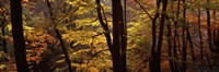 """Mid Section View Of Trees, Littlebeck, North Yorkshire, England, United Kingdom by Panoramic Images - 36"""" x 12"""", FulcrumGallery.com brand"""