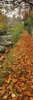 Leaves On The Grass In Autumn, Sneaton, North Yorkshire, England, United Kingdom by Panoramic Images - various sizes
