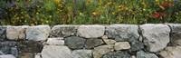 "Wildflowers growing near a stone wall, Fidalgo Island, Skagit County, Washington State, USA by Panoramic Images - 36"" x 12"""