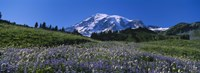 Wildflowers On A Landscape, Mt Rainier National Park, Washington State, USA Fine Art Print