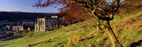 """Church On A Landscape, Rievaulx Abbey, North Yorkshire, England, United Kingdom by Panoramic Images - 36"""" x 12"""""""