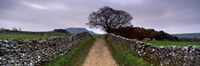 """Stone Walls Along A Path, Yorkshire Dales, England, United Kingdom by Panoramic Images - 36"""" x 12"""""""