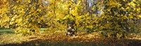 """Trees in autumn, Stuttgart, Baden-Wurttemberg, Germany by Panoramic Images - 36"""" x 12"""""""