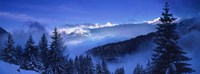 """Trees on a polar landscape, Simplon Pass, Switzerland by Panoramic Images - 36"""" x 12"""""""