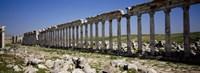 Row of Columns, Cardo Maximus, Apamea, Syria Fine Art Print